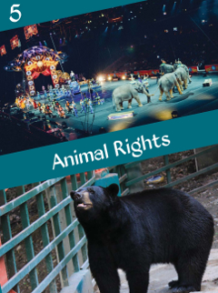 A5 Animal Rights